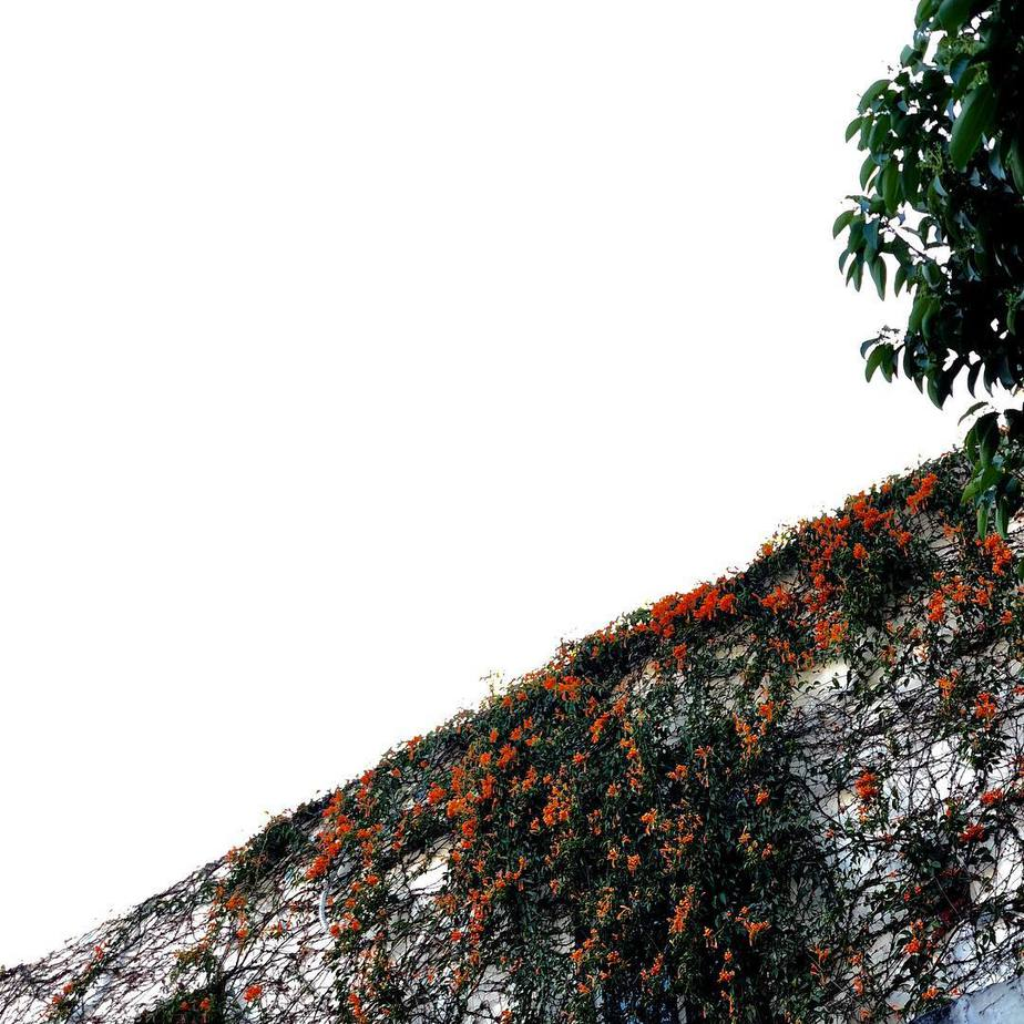 1520234257 #flower #wall #panzhihua #china - FunAndBike.fr