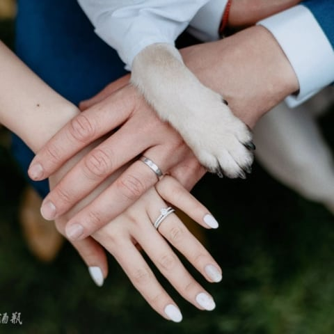 wedding-dog-cute-ring-chengdu-480x480 Home