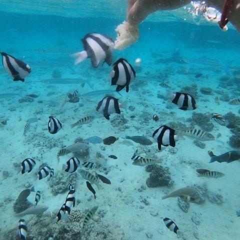 fishfeeding-fiji-tropicaislandresort-sandbank-snokeling-480x480 Home